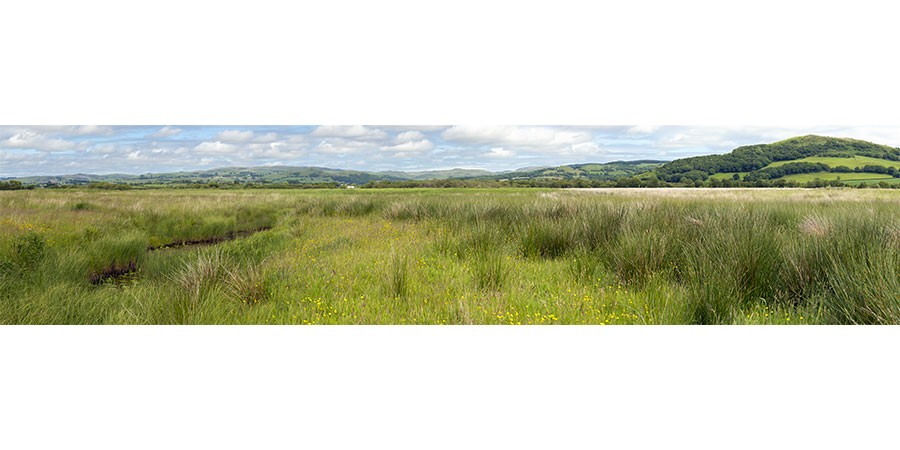 Tregaron Bog Grasslands