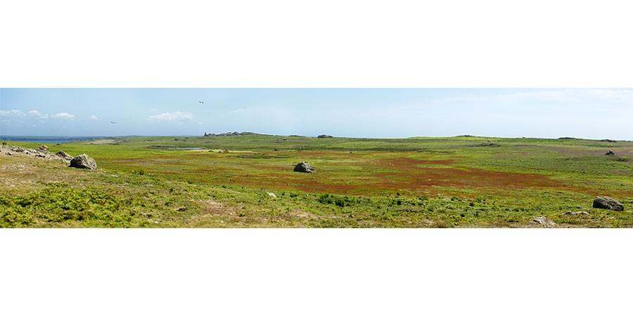 North Plateau - Skomer Island