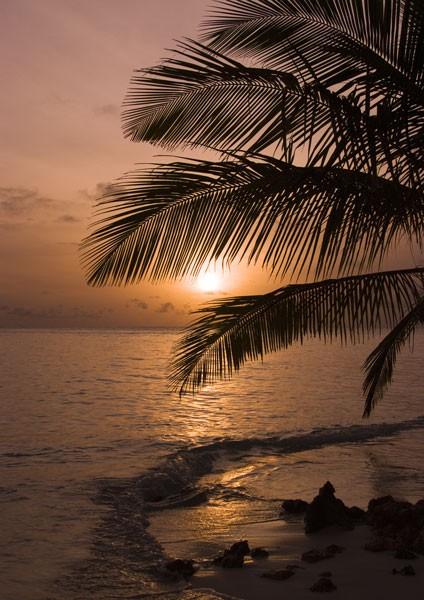 Tropical Sunset - Crescent Tide