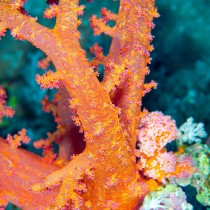 Spicules tree coral polyps