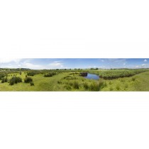 Cors Caron Summer - Panoramic Landscape