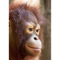 Enigmatic portrait of an Orangutan