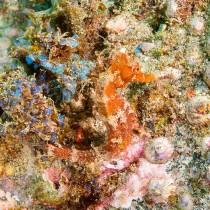 Seahorse hidden in an exquisite underwater tableau