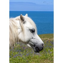 Welsh Pony by the azure blue Irish Sea