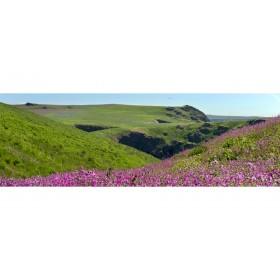 Skomer Island - Spring Landscape