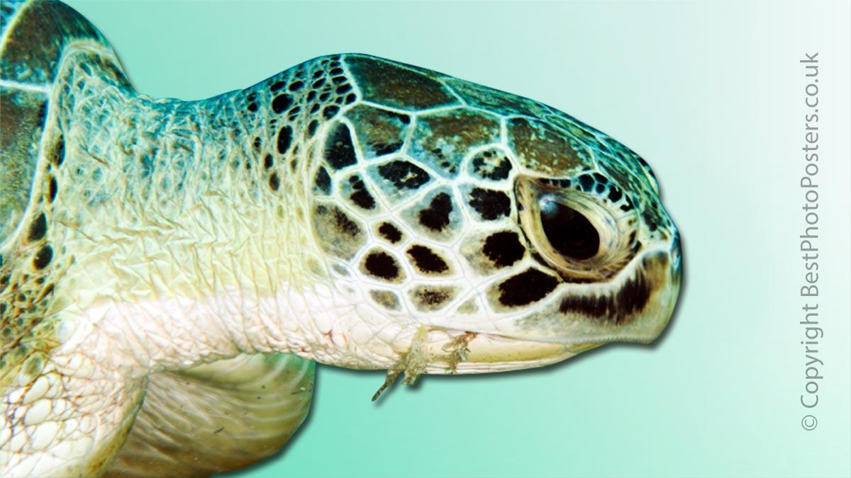 Underwater Photography - Sea life