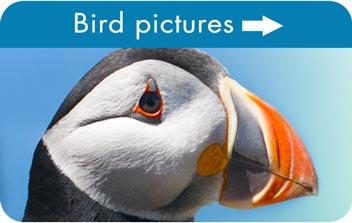 Bird pictures