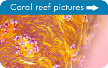 Coral reef pictures