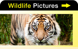 Wildlife Pictures