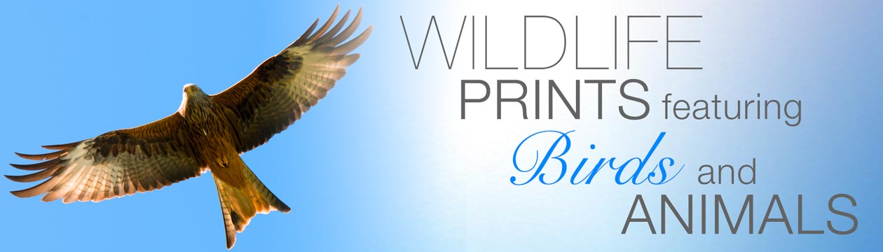 Wildlife prints