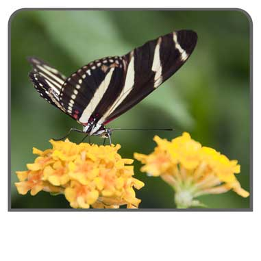 Wildlife Photography - Butterfly Pictures