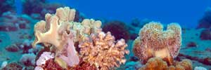 Pictures of corals