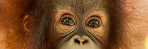 Animal pictures - primates